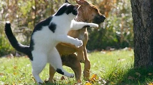 Primer historia de perros y gatos