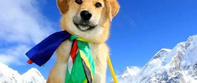 Conozcan a Rupee, el primer perro en escalar el Everest