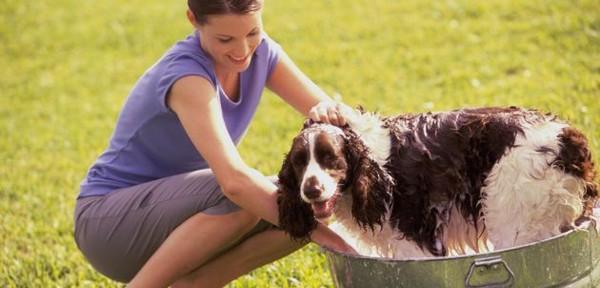 Trucos para bañar a tu perro y evitar que huya del agua