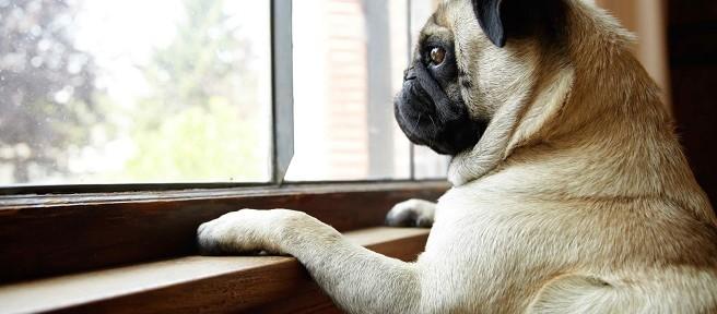 Check-list si tu perro se va a quedar solo en casa por varios días