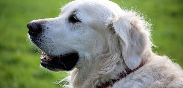 Curiosidades caninas que no sabías