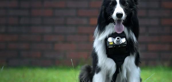 Heartography, la cámara para perros