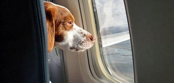 Viajar en avión con perro, ¿qué necesitas?