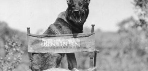 Rin Tin Tin, la súper estrella canina