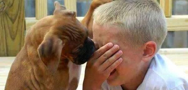 Empatía en los perros: sí perciben la tristeza de los humanos