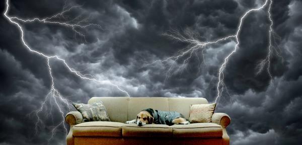 ¿Cómo calmar a tu perro en las tormentas?