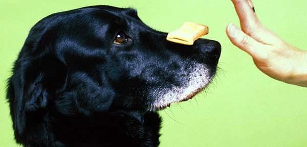 7 errores comunes al entrenamiento canino