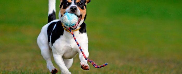 6 errores al llevar a tu perro al parque