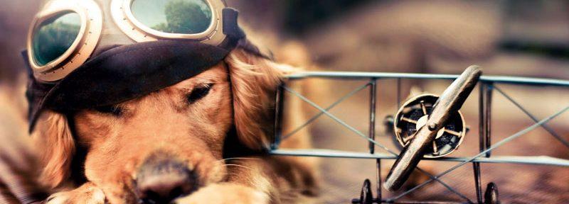 ¿Viajas con tu mascota? Conoce qué hacer para evitar accidentes o extravíos