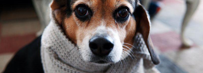 ¿Cómo cuidar a tu mascota? Evita que pase frío en el invierno