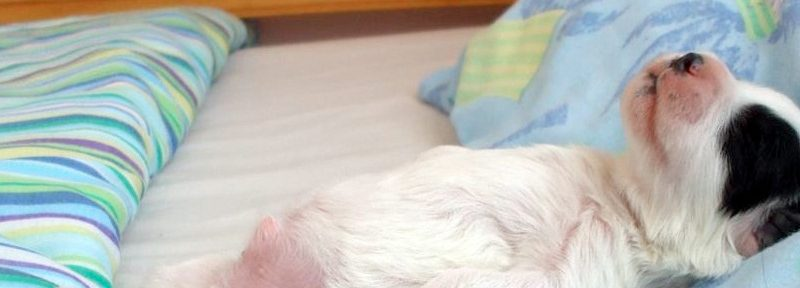 Haz que tu cachorro duerma por las noches
