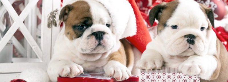 Consejos para adoptar un perro en navidad:
