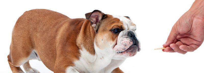 ¿Cuántos galletas o premios puedo darle a mi cachorro?