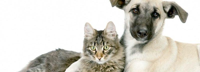 Constitución de la CDMX cuidará de los derechos de los animales